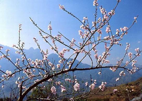 sapa_flower.jpg
